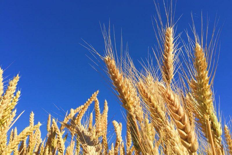 Suomenkonehuolto viljapelto, ympäristöystävällisyys